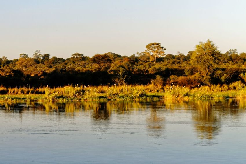 Evening sunlight on Okovango river bank Okovango Okovango River Namibia Caprivi Africa River Riverside River Bank  Reflection EyeEm Selects Tree Water Lake Reflection Sky Landscape Plant Wetland Swamp Reed Marsh Reed - Grass Family