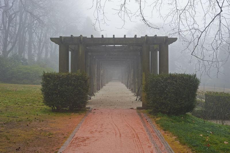 Tree Fog The