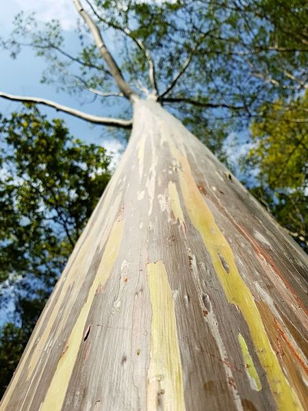rainbown tree Travel Thailand Tree Day Low Angle View No People Nature Outdoors Growth Sky Beauty In Nature