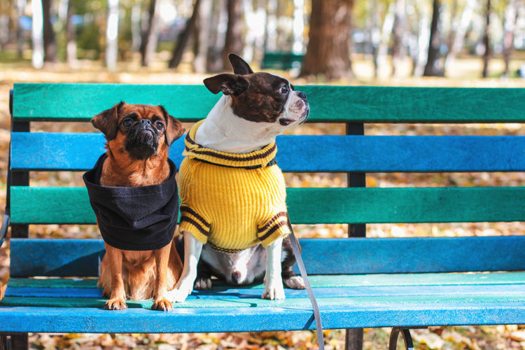 Dogs Sitting On Bench In Park