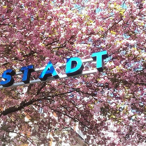 ...Stadt. I was accompanying my GF this day, just to look at this particular Street in Bonn, Germany. Very nice street, very pink, and there was sunshine! What a good day. Now guess which letter is missing from the word stadt? Kibo2015 Kibo Bonn Kirchblüten Cherryblossom Frühling Rwthstudent Rwth