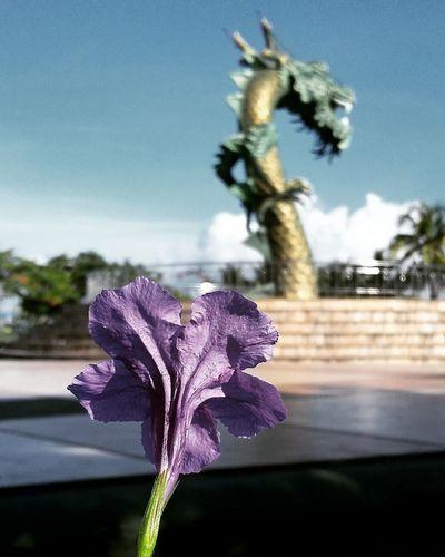 Green Dragon Kamali Beachbaubaucity Flowers, Nature And Beauty INDONESIA