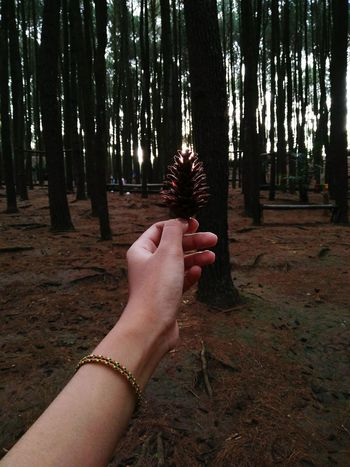 -imissyou- Pinery Person Forest Tree Trunk WoodLand Part Of Tree Cropped Non-urban Scene Holding Tranquility Nature Tranquil Scene Outdoors Beauty In Nature Memories