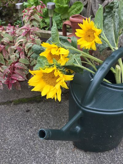 High angle view of yellow flower in pot