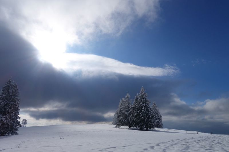 LOW ANGLE VIEW OF SNOW COVERED LANDSCAPE