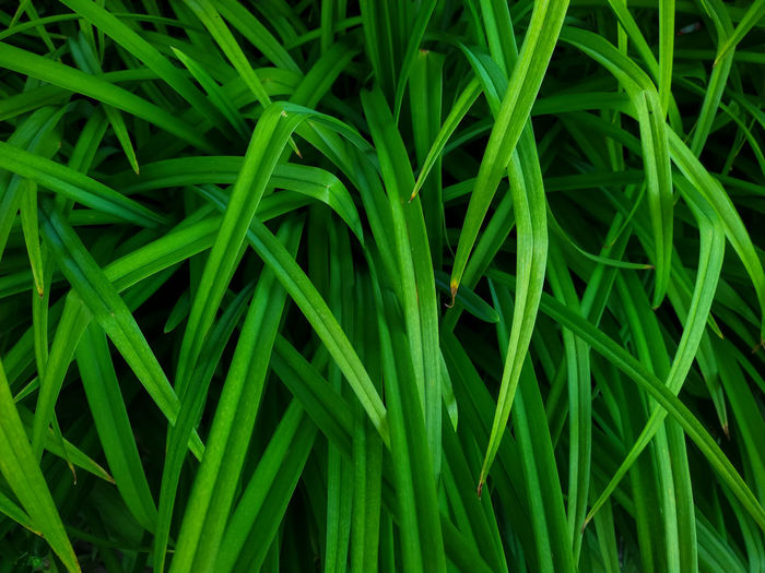 Full frame shot of green grass. botanical background