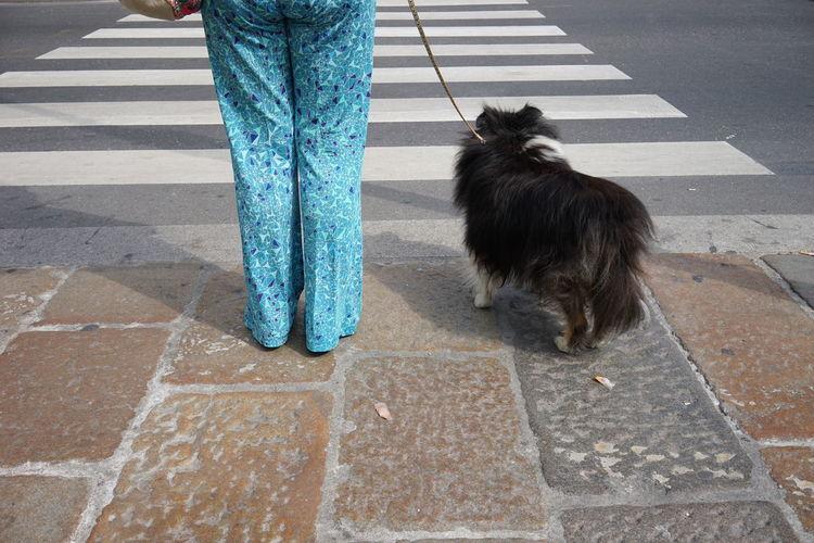 Dog On Zebra Crossing