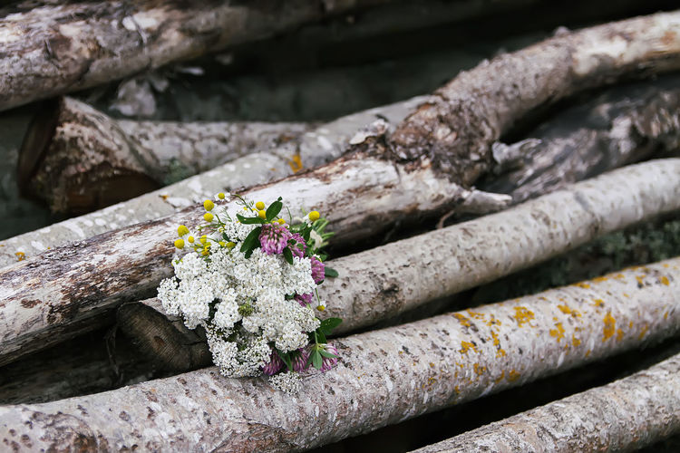 Close-up of flowering plants on log