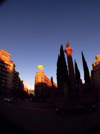 Mussol, owl, Barcelona, Catalonia