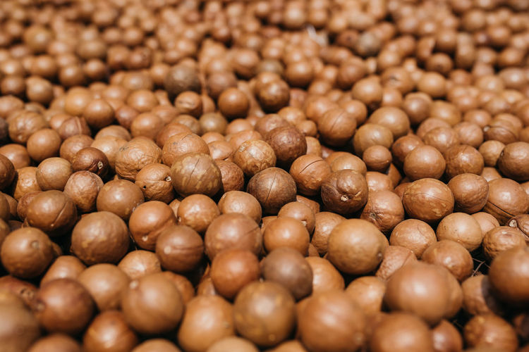 From an organic macadamia farm outside of Antigua, Guatemala Backgrounds Close-up Food Food And Drink Full Frame Healthy Eating Ingredient Macadamia Macadamia Farm Macadamia Nut Macadamia Nuts Selective Focus First Eyeem Photo