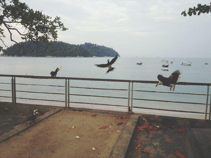 Toco Flight Birds in Pangkor Malaysia South East Asia