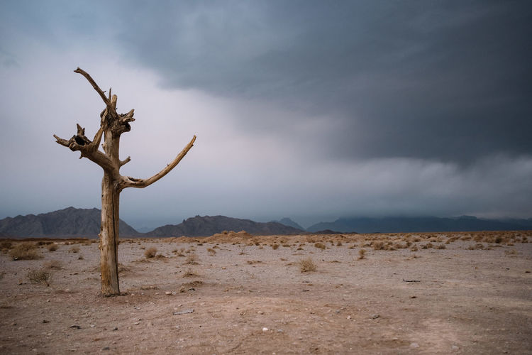 Dead tree on desert against sky