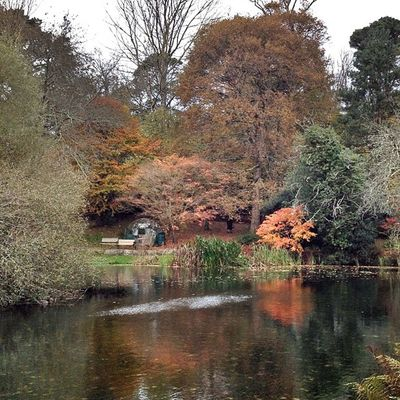 Autumn... #autumn #fall #colour #orange #lake #water #trees #improvedimage Water Trees Autumn Fall Orange Lake Colour Improvedimage