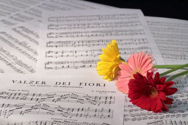 when music meets photography Art Passion Beautiful Music Notes Waltzer Flower Red Color Yellow Flower Composition EyeEm Gallery EyeEm Selects Flower Paper Education Yellow Newspaper Book Close-up Petal