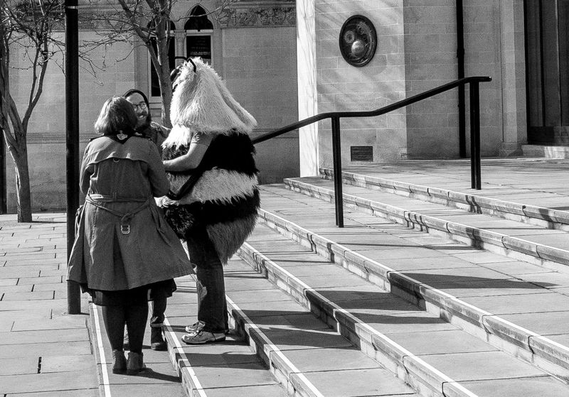 Man dressed as a bee, Northampton Guildhall Northampton Black And White Bee