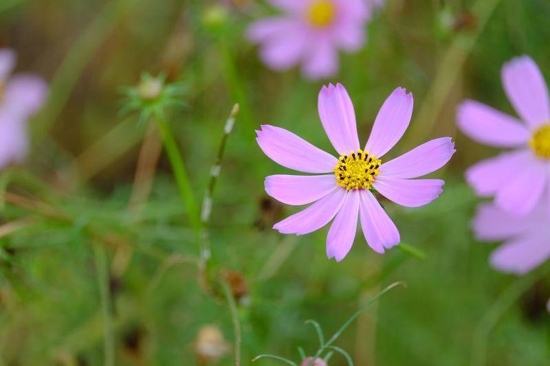 Pink flower Flowering Plant Flower Freshness Plant Petal Beauty In Nature Vulnerability