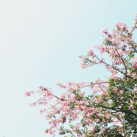 記憶 事情發生在某個清早, 一個人在樹下避雨, 好悶…好悶…