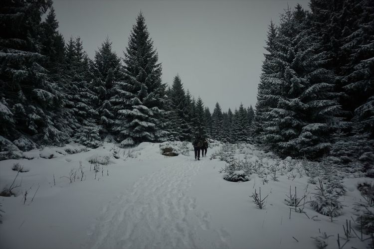 Adventure Club Hiking Nationalpark Harz Spruce Tree Trees Adventure Animal Themes Beauty In Nature Brocken Cold Temperature Conifers Fir Full Length Harz Mountain Nature One Person Outdoors People Scenics Ski Holiday Sky Snow Winter