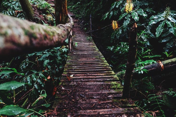 Deep in the Woods Forest Travel Travel Destinations Wanderlust Nature Plant Tree Direction The Way Forward Nature Growth Day Forest Outdoors Built Structure Land No People Footpath Bridge Rope Bridge Diminishing Perspective Bridge - Man Made Structure Connection Low Angle View