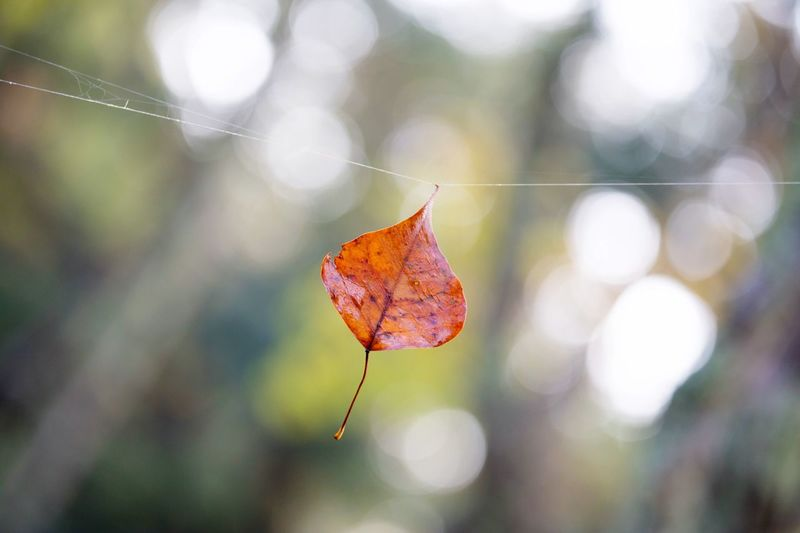 Plant Part Leaf Close-up Autumn Focus On Foreground Nature Autumn Mood Plant No People Day Fragility Spider Web Beauty In Nature Tree Vulnerability  Outdoors Dry Change Selective Focus Wet