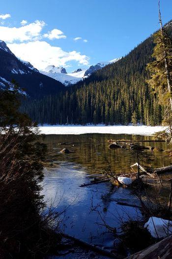 British Columbia EyeEm Best Shots EyeEm Nature Lover Mountain Tree Snow Lake Forest Pinaceae Pine Tree Reflection Wilderness Sky