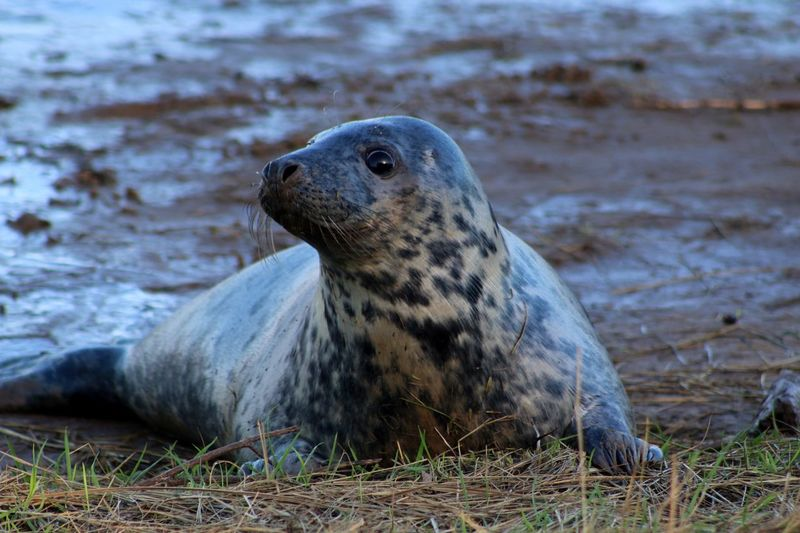 Seal EyeEm Nature Lover Nature Animal Photography Wildlife Beach Photography