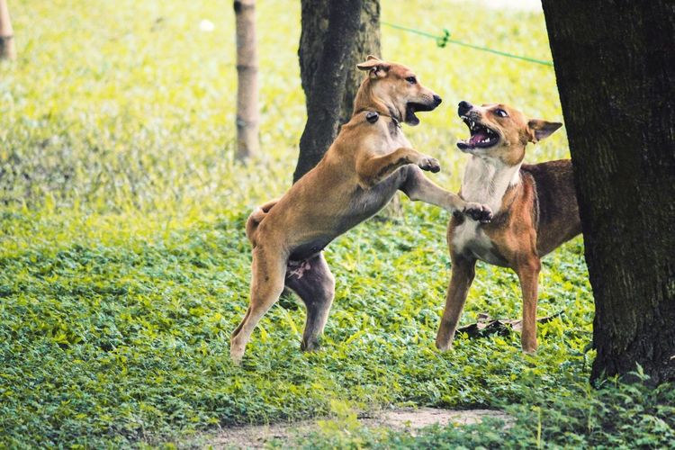 friendship EyeEm Best Shots EyeEm Nature Lover EyeEm Gallery Eyemphotography Bangladesh Landscape Nature Photography Artistic Photooftheday Green Animal Themes Group Of Animals Mammal Canine Two Animals Domestic Animals Nature Animal Wildlife Animals In The Wild Outdoors Domestic