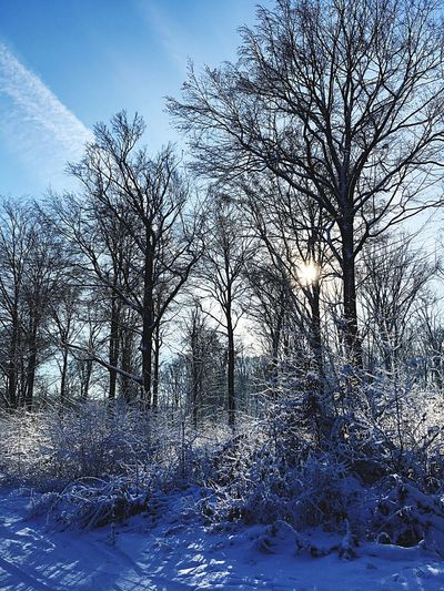 Tree Snow Cold Temperature Winter Bare Tree Sky Nature Outdoors Tranquility No People Scenics Beauty In Nature Tranquil Scene Day Landscape Branch