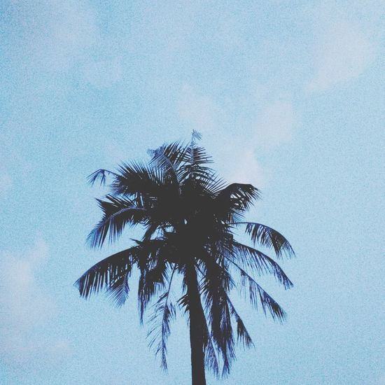 The infamous summer tree. Summer Trees Infamous Vacation Blue Black Silhouette First Eyeem Photo FirstEyeEmPic Eyeem Philippines