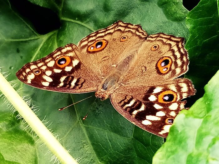 Animal Animal Themes Animal Wildlife Animals In The Wild Beauty In Nature Butterfly Butterfly - Insect Close-up Day Green Color Insect Leaf Leaves No People One Animal Outdoors