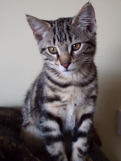 Tiny Tiger Cats Kittens Soulful Eyes Farm Cat Barn Cats Love Cats Felines