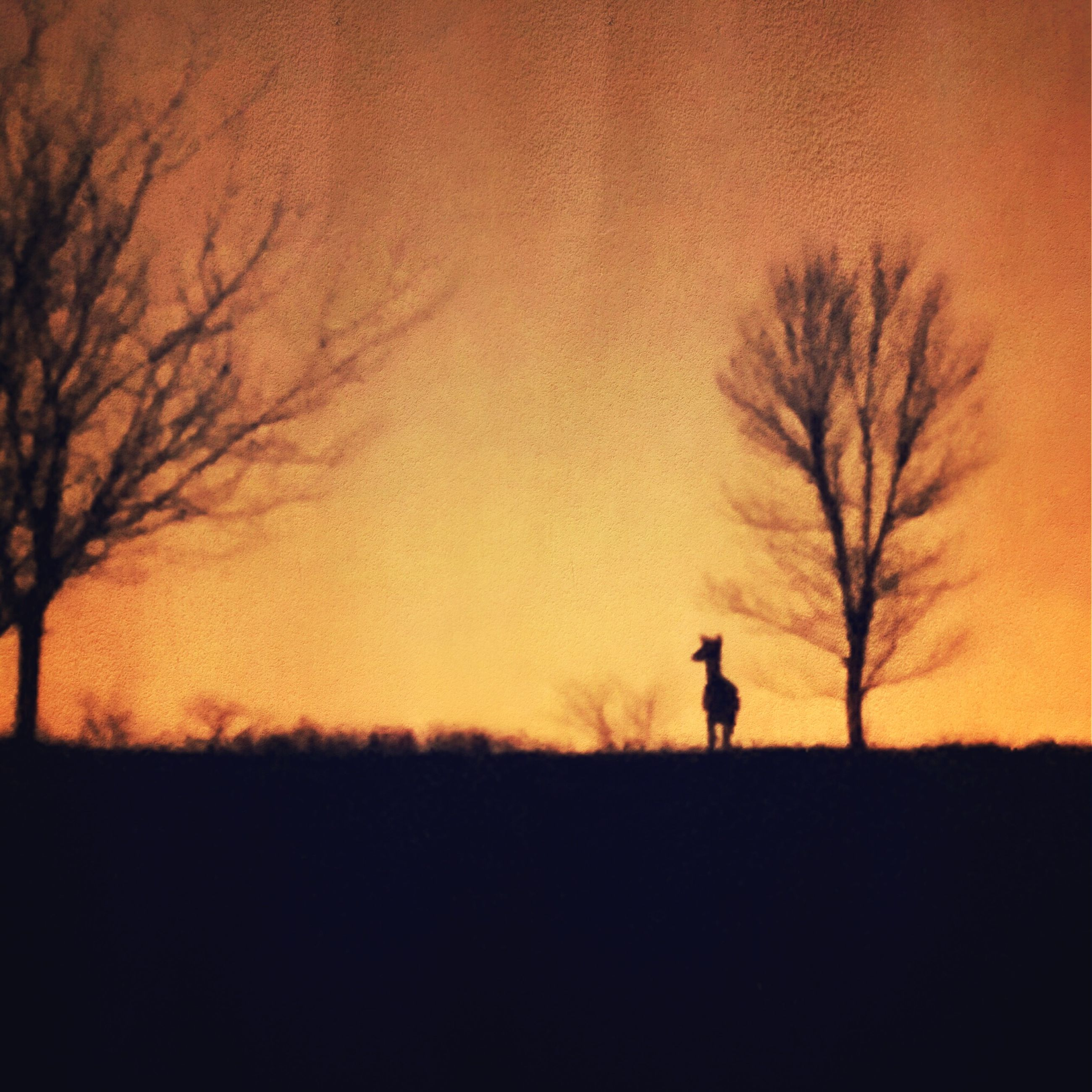 silhouette, sunset, orange color, landscape, sky, bare tree, field, tranquil scene, beauty in nature, tranquility, tree, scenics, nature, men, standing, leisure activity, full length, lifestyles