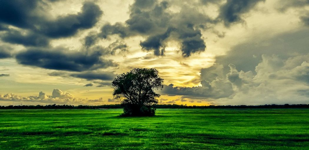 Tree Agriculture Sunset Rural Scene Field Sky Grass Landscape Cloud - Sky Green Color Single Tree Dramatic Sky Atmospheric Mood