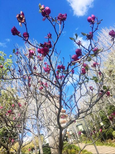 Flower Tree Growth Beauty In Nature Low Angle View Nature Sky Day Springtime
