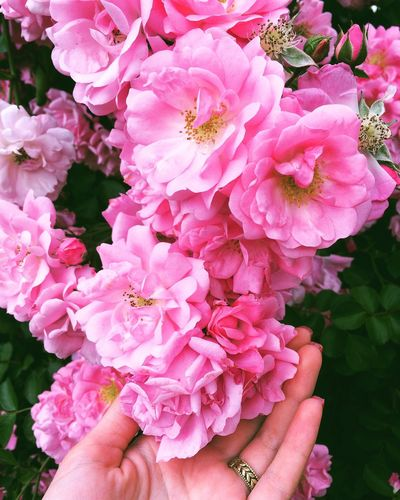 Flower Pink Color Beauty In Nature Petal Fragility Outdoors Nature Day Close-up Growth Flower Head Freshness Plant Human Hand One Person People