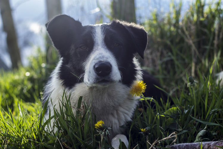 Animal Animal Themes Bestfriend Bestfriends Close-up Collie Comfortable Companion Curiosity Cute Cute Pets Dog Focus On Foreground Loyalty One Animal Pet Portrait Poser Puppy Rambo Relaxation Relaxing Sitting Sunshine Zoology