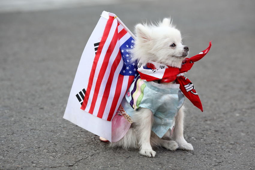 dog with US and South Korean flag symbolizing the two countries alliance and friendship Alliance International Politics South Korea USA Animal Themes Day Dog Domestic Animals Flag Friendship Military No People One Animal Outdoors Partnership Patriotism Pet Clothing Pets West Highland White Terrier
