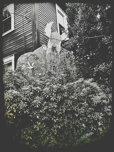 The strangest thing ever on our walk, we see these huge bushes in front of a house and also a gargatuan viking behind the bushes! Had to take a shot of it! LOL Black&white