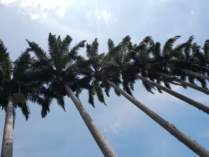 Sky blue Tree Tree Area Palm Tree Forest Water Sun Tropical Climate Tree Trunk Blue City Coconut Palm Tree Palm Leaf Coconut Tropical Tree Frond Date Palm Tree