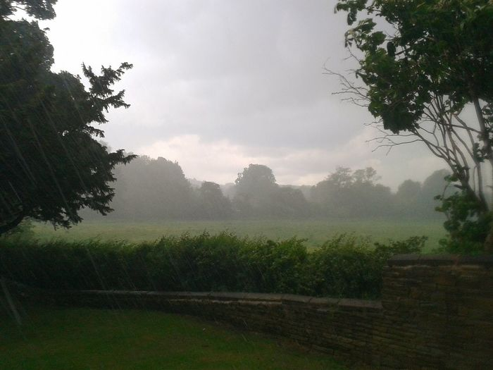 Tree Agriculture Fog Rural Scene Landscape Field Nature Storm Beauty In Nature EyeEmBestPics Wet Torrential Rain Water Extreme Weather Atmospheric Mood Dramatic Sky morning Outdoors Cloud - Sky Growth