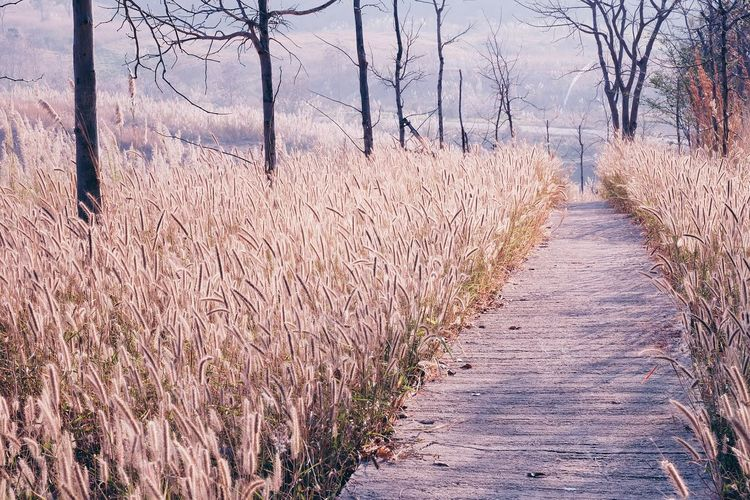 No People Day Outdoors Nature Sky Autumn Fall Colors Trees Field Walkway Dried Grass Field