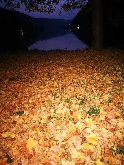 Herbst Laub Spaziergang Durch Den Herbst. Treis Karden Bei Nacht Treis Karden Im Herbst Water