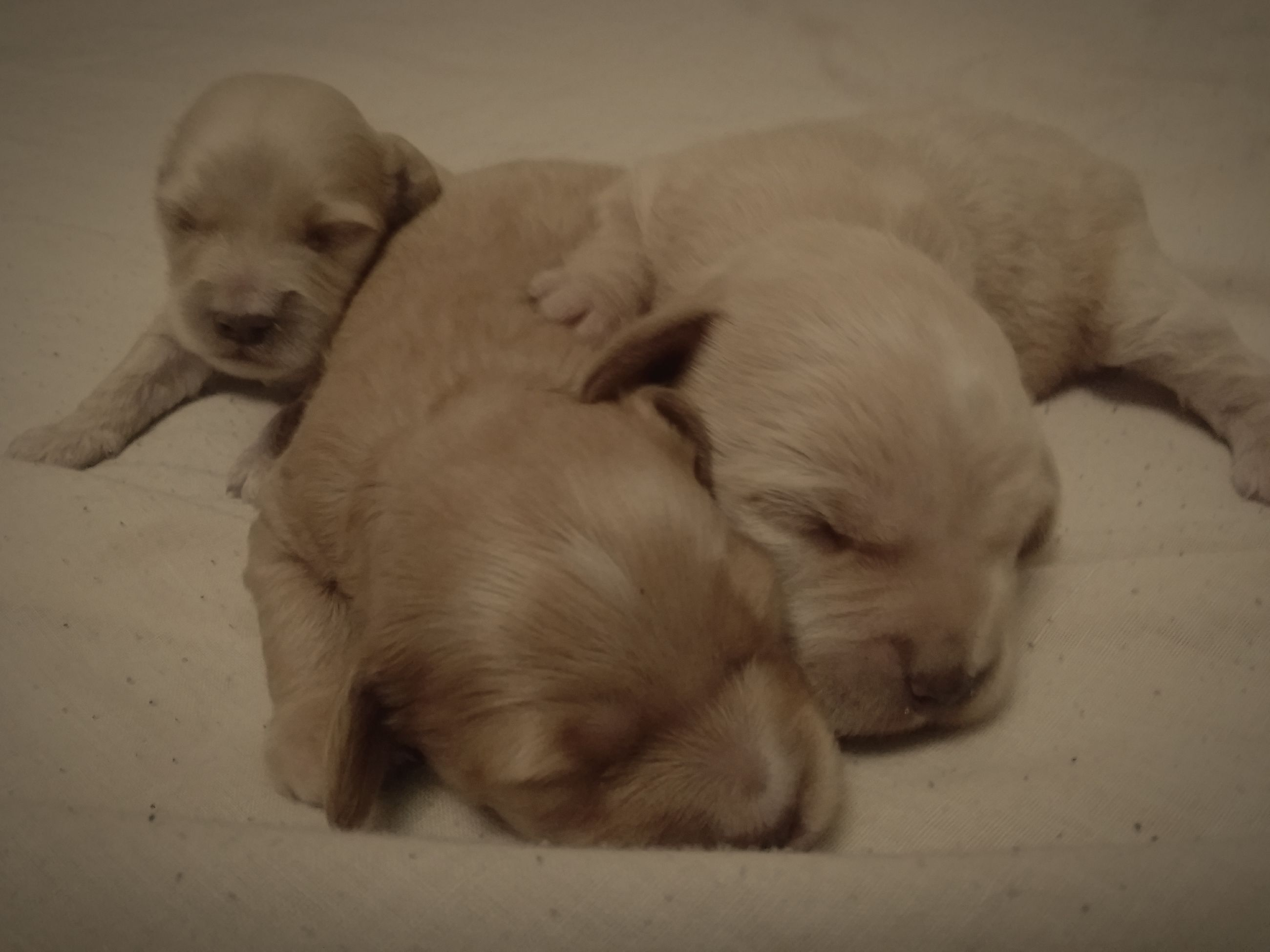 dog, pets, sleeping, domestic animals, puppy, togetherness, animal themes, indoors, eyes closed, cute, mammal, lying down, relaxation, young animal, no people, close-up, day