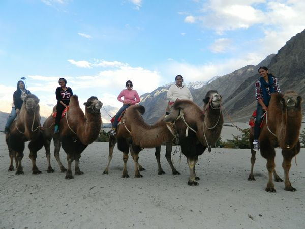 Women high on wanderlust.. arent the double humped camels amazing EyeEmBestPics Eye4photography  We Love Camels! Camel Riding Leh Ladakh.. Womenpower I Love Nature! What A Sky! Service Animals NubraValley