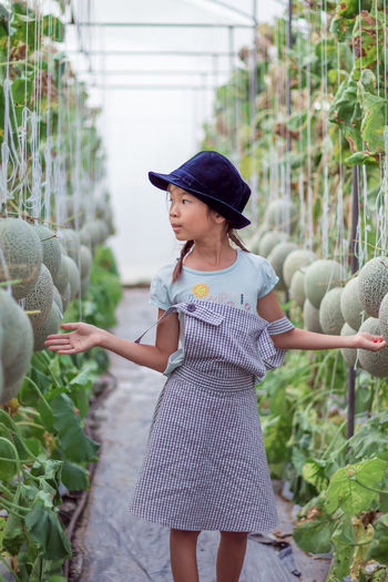 Cute girl standing amidst cantaloupes growing on farm
