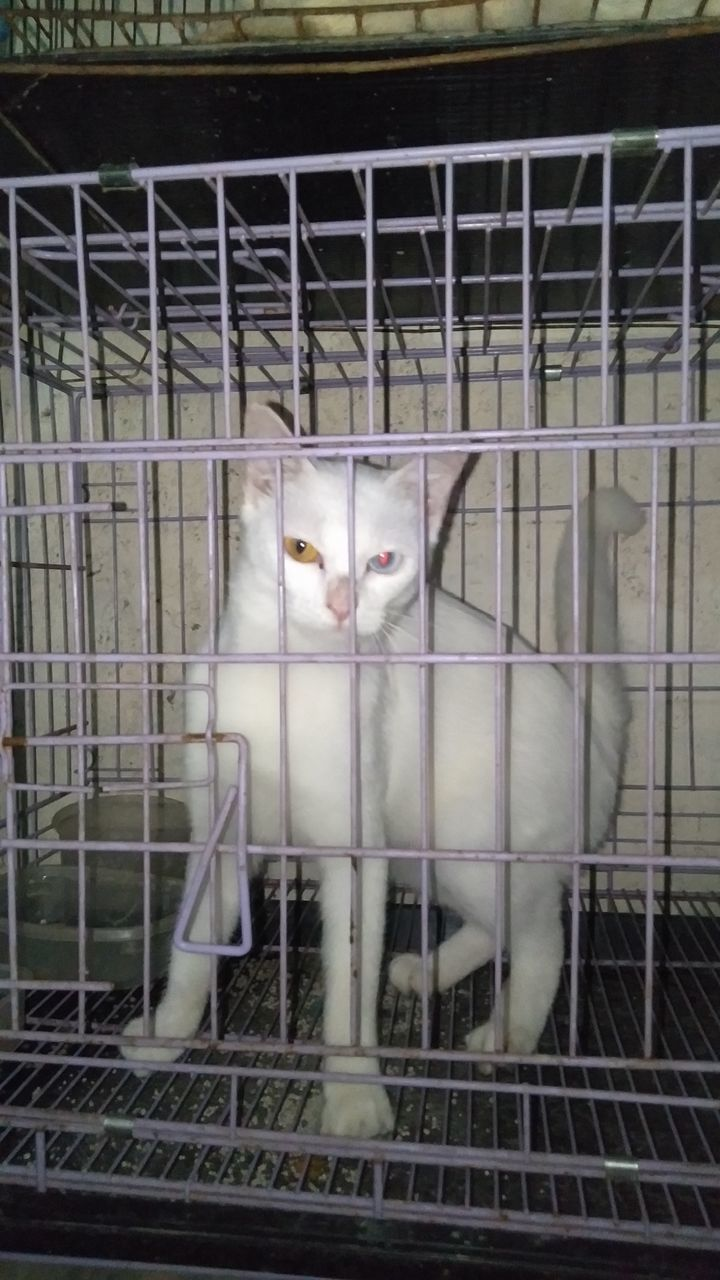 PORTRAIT OF CAT IN CAGE AT HOME