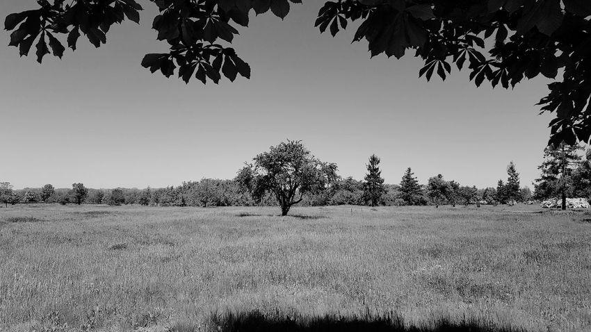 Tree Pliska Bulgaria Plant Grass Leafs 🍃 Green Black&white Photography Monochrome Tree Silhouette Rural Scene Sky Animal Themes Landscape Single Tree