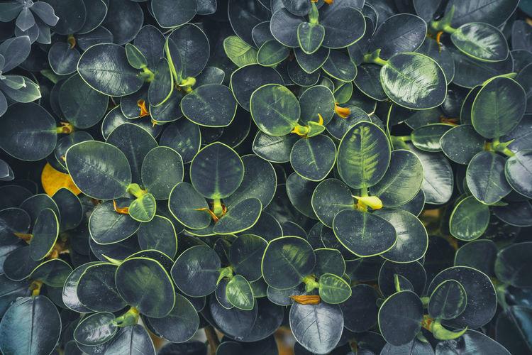 Full frame shot of leaves floating on water
