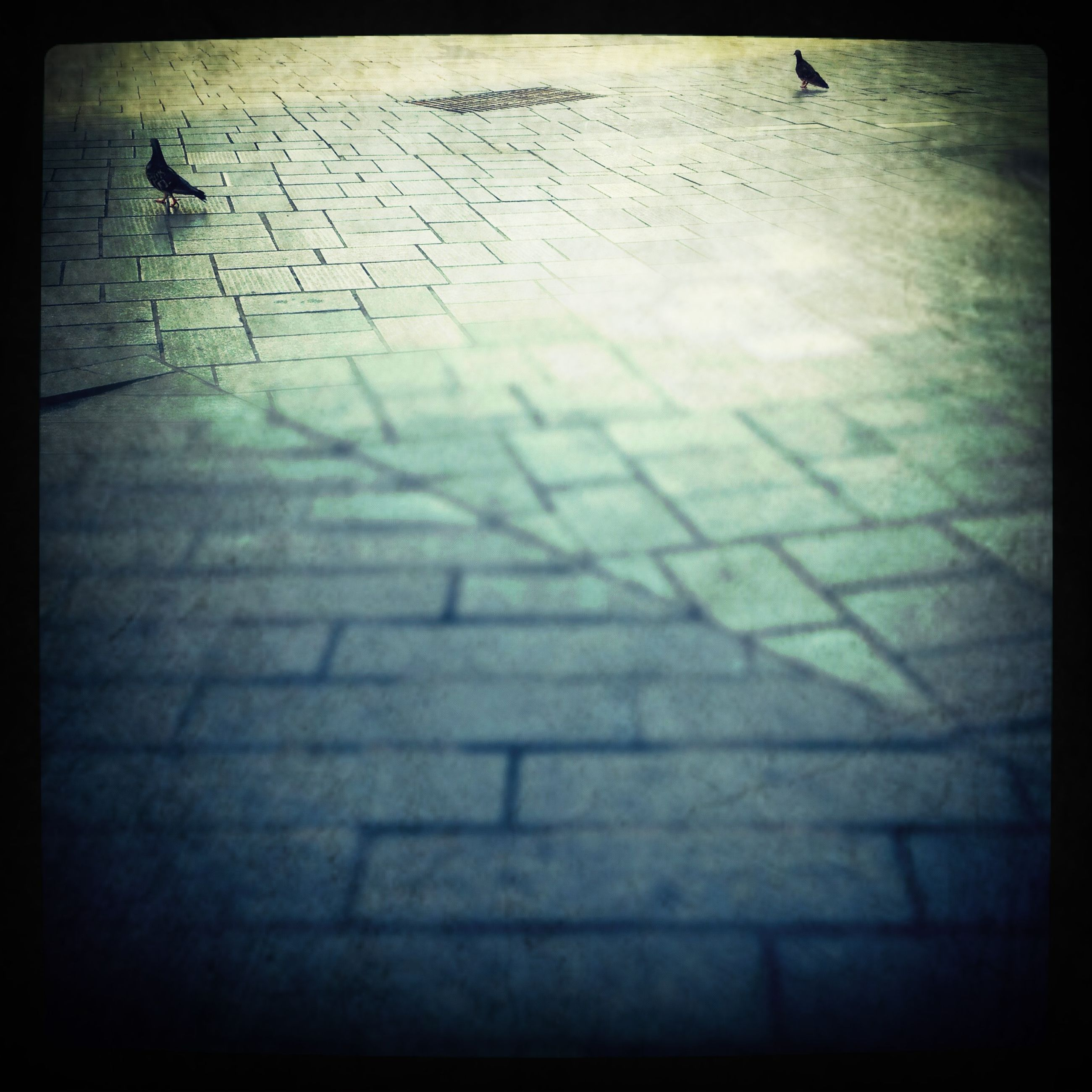 transfer print, auto post production filter, flying, bird, animal themes, high angle view, wildlife, street, day, outdoors, shadow, animals in the wild, sunlight, sidewalk, walking, built structure, spread wings, vignette, one animal, road marking