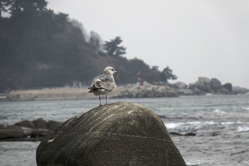 Animal Themes Animal Wildlife Animals In The Wild Beach Beauty In Nature Bird Day Focus On Foreground Nature No People One Animal Outdoors Pelican Perching Sea Sea Bird Sea Life Seagull Seagulls Seaside Sky Water